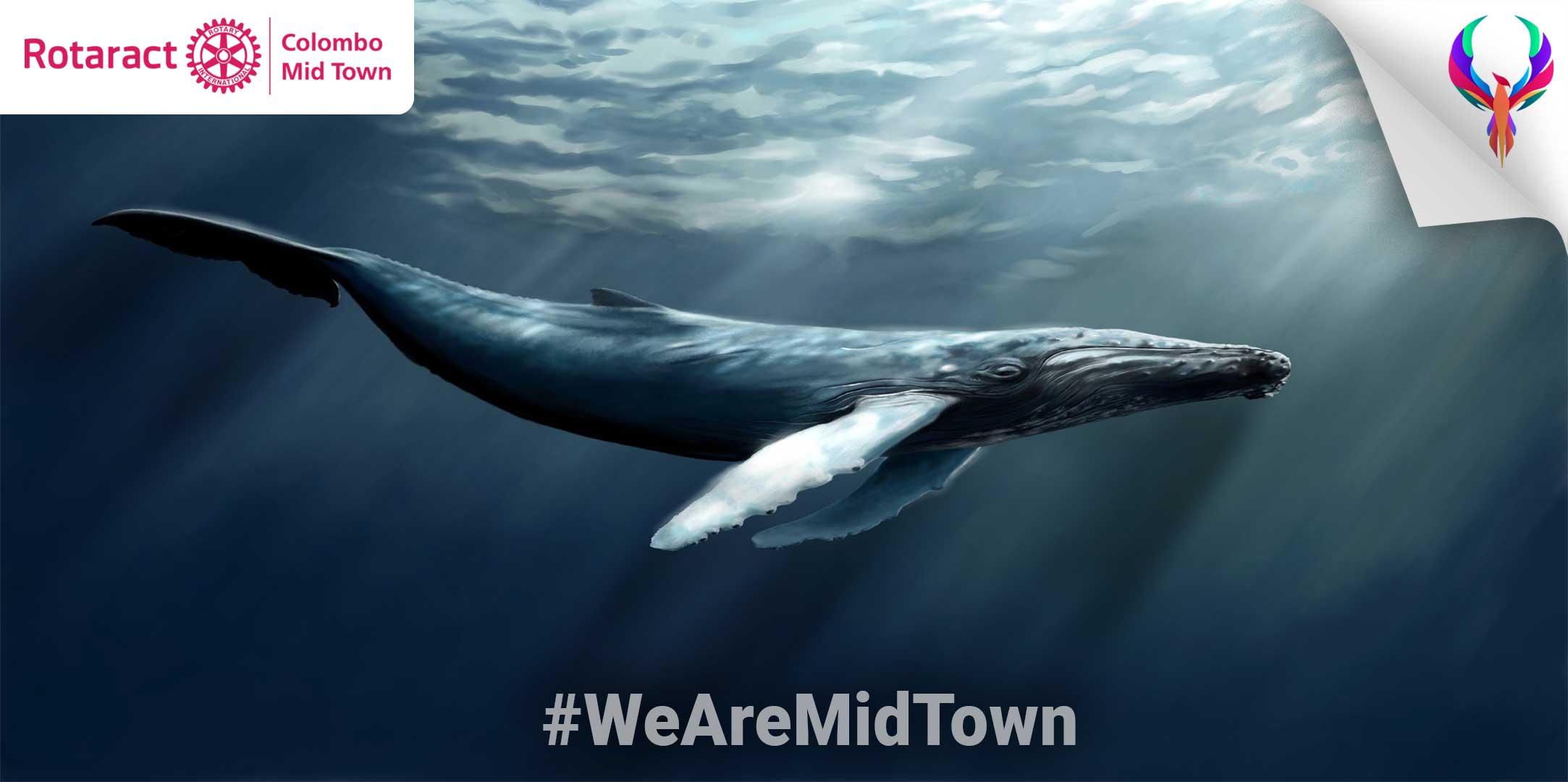The Great Cetacean Stranding